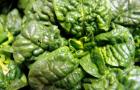 Spinat fördert die Entstehung von Nierensteinen und Osteoporose